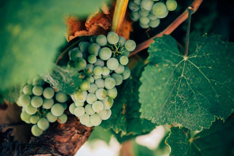 Καλοκαιρινά wine tastings: Επισκεφθείτε τα αθηναϊκά οινοποιεία