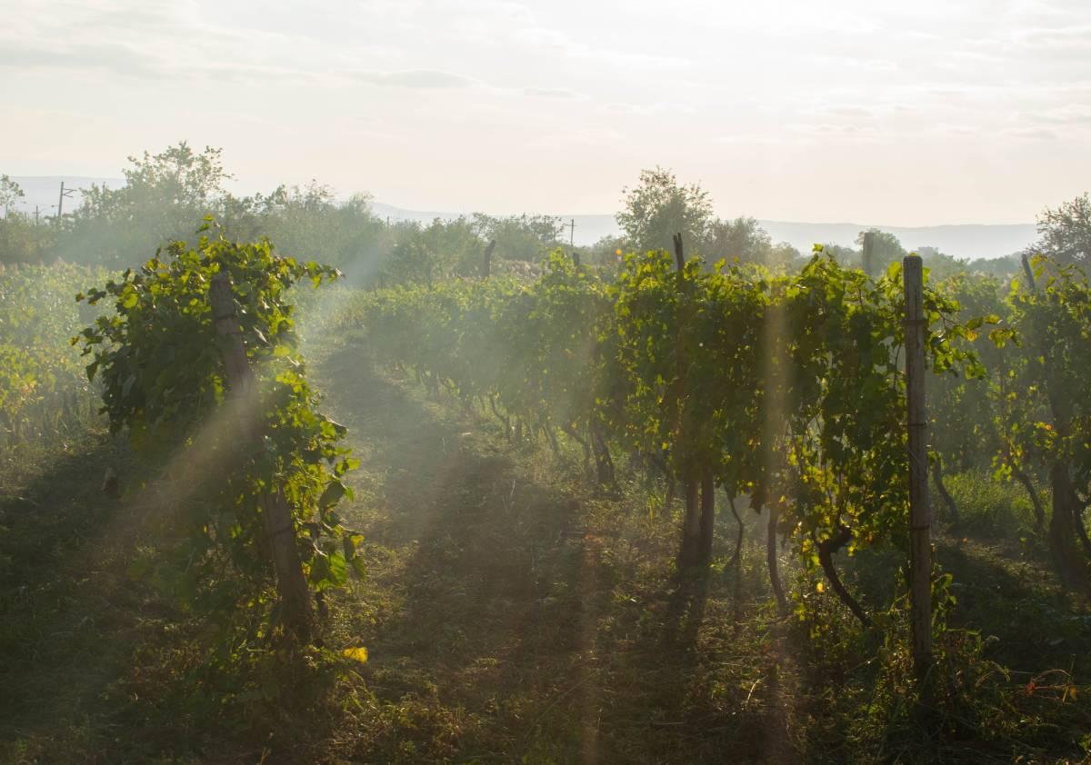 Είστε λάτρεις του κρασιού; Αυτοί είναι οι φθινοπωρινοί προορισμοί που σας ταιριάζουν